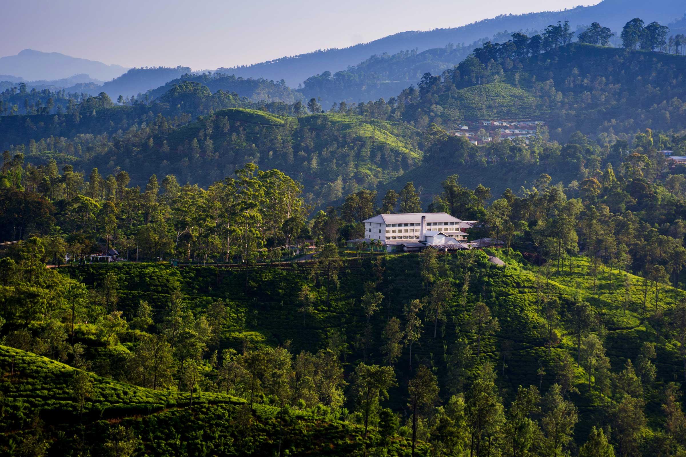 A tea estate factory
